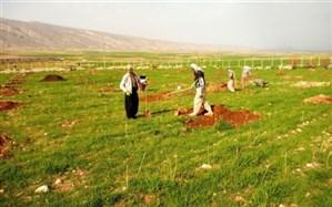 کاشت 364 اصله نهال در دانشگاه آزاد اسلامی ایوان غرب به یاد شهدا