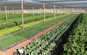 طرح سایهبان در اراضی کشاورزی اجرا میشود