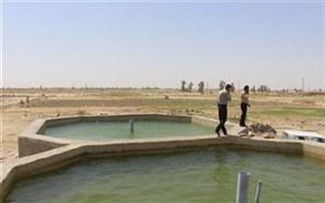 تمام پرورش دهندگان ماهی استخرهای پرورشی خود را بیمه کنند
