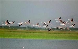 رهاسازی ۸ قطعه پرنده وحشی در تالاب سولدوز